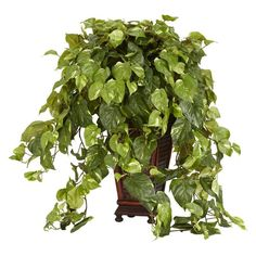Nearly Natural 6703 Vining Pothos with Vase Decorative Silk Plant, Green *** You can find more details by visiting the image link. (This is an affiliate link) Topiary Plants, Ivy Plants, Potted Trees, Real Plants, Faux Plants, Foliage Plants, Plants Indoor, Palm Trees, Artificial Garden Plants
