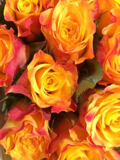 Orange Rosen, Flowers, Plants, Plant, Royal Icing Flowers, Flower, Florals, Floral, Planets