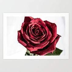 The Rose Art Print by Elias Silva Photography - $16.00