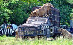 Safari World - Bangkok