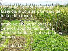 Mensagem bíblica do livro de Provérbios.