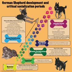 German Shepherd Puppy Training Guide                                                                                                                                                                                 More
