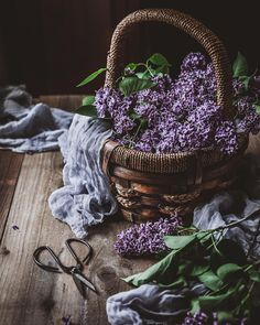 Capture the essence of lilacs with a lilac honey infusion! Through lilacs' transient nature, they teach us how to calmly accept the impermanence of life. Witch Aesthetic, Purple Aesthetic, Lilac Flowers, Beautiful Flowers, Purple Roses, Lilac Bushes, Belle Photo, Aesthetic Pictures, Flower Power