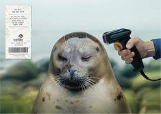 Fondation Surfrider : Notre sur-consommation affecte la faune et la flore…Campagne 2015