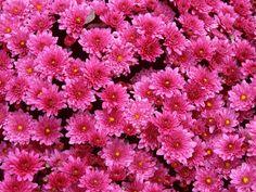 Garden Flowers Wallpaper beautiful flowers | beautiful flowers wallpapers beautiful flowers