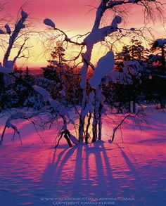 Luosto, Lapland, Finland. Before Sunrise, Winter Scenery, Winter Beauty, Top Of The World, Places Around The World, Beautiful Landscapes, Lapland Finland, Beautiful World, Winter Wonderland