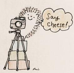 """Cute hedgehog artwork series by Nami Nishikawa . """"Say Cheese"""""""