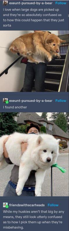 Funny Animal Memes, Dog Memes, Cute Funny Animals, Funny Animal Pictures, Cute Baby Animals, Funny Cute, Funny Dogs, Animals And Pets, Cute Dogs