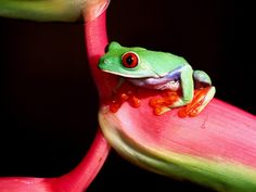 Colorful Frogs | Photo Gallery
