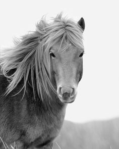horse island photography - Google Search