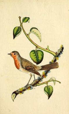 The language of birds : - by Mrs G. Spratt, 1837  Biodiversity Heritage Library
