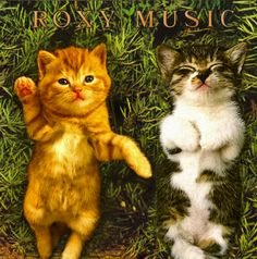 Album covers re-imagined : with kittens! Roxy Music!