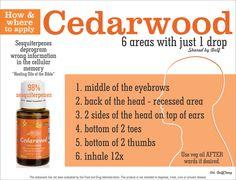 Cedarwood essential oil. Order your oils at www.EssentialOilsObsessed.com