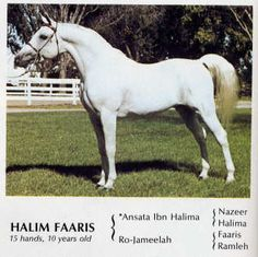 Halim Faaris