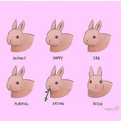 "193 curtidas, 6 comentários - @sirs_little_slut no Instagram: ""CUTE LIL BUN BUN #bunny #rabbit #emotions #ddlg #little #cute #daddy"""