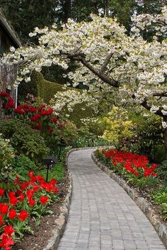 Beautiful walkway lined with flowering trees and annuals