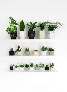 Palua Planter, Tealight Holder Ø - cm Bedroom Plants Decor, House Plants Decor, Plant Decor, Room Decor, Uk Plant, Fake Plants Decor, Little Plants, Small Plants, Cool Plants