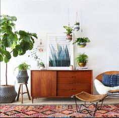 Place these plants right where they'll impress not only your chicest friends, but you too, with their ability to survive even your black thumb.