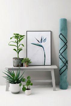foto-esterlicia-alfombra-turquesa-negro-