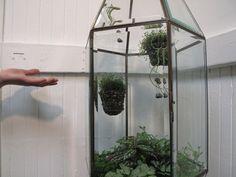 DIY light fixture terrarium