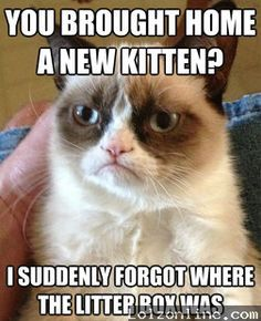 Why I cannot have a new kitty. :(