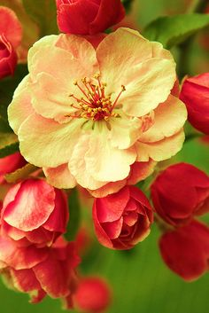 Sweet Spring Blossoms by Pink Sherbet Photography, via Flickr