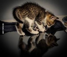 Kitten letting his reflection know who runs things around here.