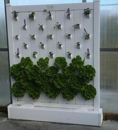 Loved this wall of the lettuce growing using aeroponics!!!!!  #lettuce #aeroponics by r_joan88