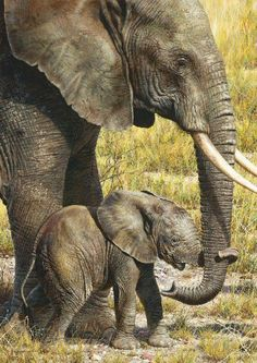 Watercolor and Gouache painting of elephant and her calf, by Carl Brenders