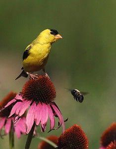 Slacker's guide to gardening for wildlife