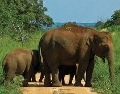 Sri Lanka Family - Elephant Paradise - Lonely Planet