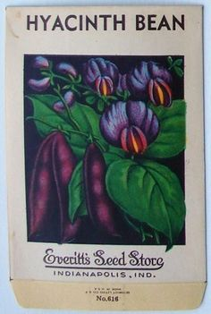 EVERITT'S SEED STORE,  Hyacinth Bean 616, Vintage Seed Packet