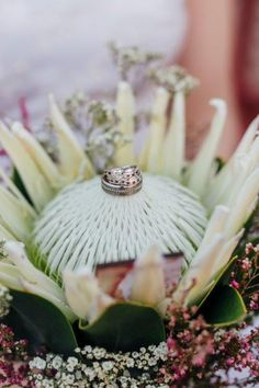 White king proteas are often the star in bridal bouquets and add a 'wow' factor to the big day. We couriered this show stopper bouquet, along with other flower arrangments, up to Kimberley for Wikus and Christine's wedding.   📷: Christine Joy  We supply flowers all over South Africa:  www.fabulousfynbos.co.za White King, Wow Factor, Bridal Bouquets, Big Day, South Africa, Flower Arrangements, November, Joy, Table Decorations