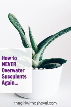 Succulent care can be tricky. Especially if you don't live in an arid environment. There are a few tricks that can make it easier though. Here's the first tip to help you learn how to water your succulents perfectly every time! How To Water Succulents, Propagating Succulents, Succulent Care, Plant Care, Herb Garden, Indoor Plants, House Plants, Environment, Herbs