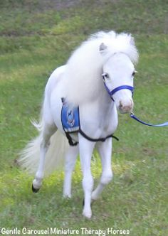 """She looks like she walked right out of a Fairy Tale!  This is """"Sweetheart"""", the youngest member of Gentle Carousels Therapy Mini Horse team."""