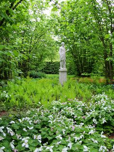 Sissinghurst- details of a renowned foundational garden by Virginia Woolf's lover (?) Vita Sackville-West. Lady ferns & Trillium grandiflora. And some trees and a statue.