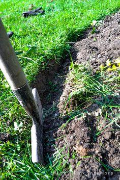 use a half moon edger / How to edge flowerbeds like a pro! via FunkyJunkInteriors.net