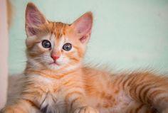 Los gatos tienen 230 huesos en el cuerpo.