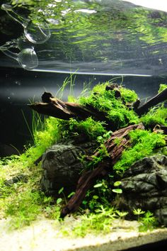Deep Rooted by Orchid. #aquascaping