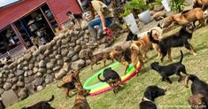 """This is what 1,000 Happy Dogs Looks Like 