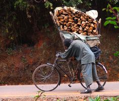 The Zomba Plateau in southern Malawi has timber that is valuable as firewood. This man is struggling off the plateau with an overloaded bicycle.