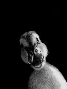 Mon canard ..*