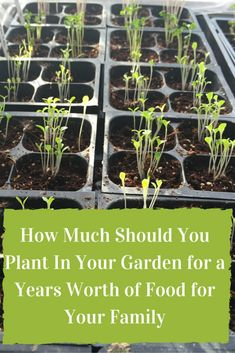 How Much Should You Plant In Your Garden for a Years Worth of Food for Your Family