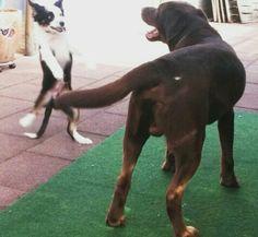 Scary big dog.