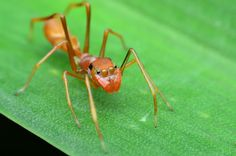 While not technically an insect, ant-mimicking spiders are an example of a creepy-crawly that employs both defensive and aggressive mimicry.