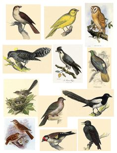 https://flic.kr/p/7WXt7a | Birds | Free to use in your Art only, not for Sale on a Collage Sheet or a CD