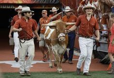 Bevo XV introduced at the 2016 home opener Texas Longhorns Football, Ut Longhorns, Dallas Cowboys, Hook Em Horns, Sports Wallpapers, University Of Texas, Cattle, Athletes, Cowboy Hats
