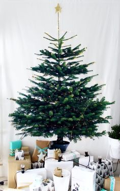 55+ Space Saving Christmas Tree Ideas Suitable For Small Rooms http://www.aladdinslamp.net/55-space-saving-christmas-tree-ideas-suitable-for-small-rooms/