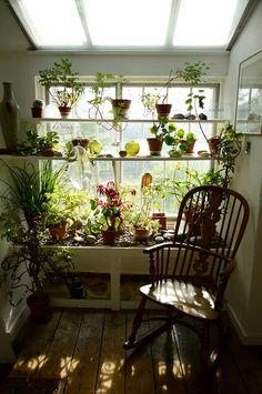 Indoor garden #IndoorGarden
