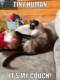 Attack Of The Funny Animals - 28 Pics